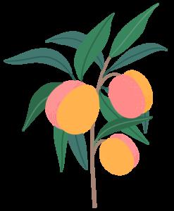 peach tree icon