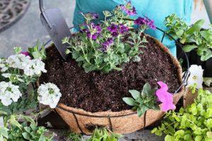 flower in potting soil